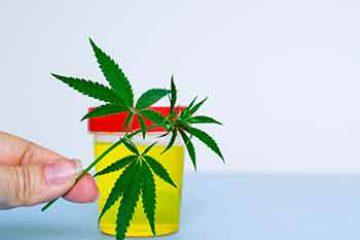 סירוב לביצוע בדיקת שכרות סמים